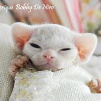 IC Elfe Feerique Bobby De Niro