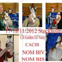 Golden Elf Nicky of Elfe Feerique - 19.03.2013 - 16:37